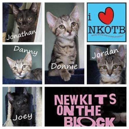 Coming soon to a cat café near you-New Kits on the Block!  Avoid the ticket lines and get your applications in early.  For more information contact: cats@catsinbloom.org