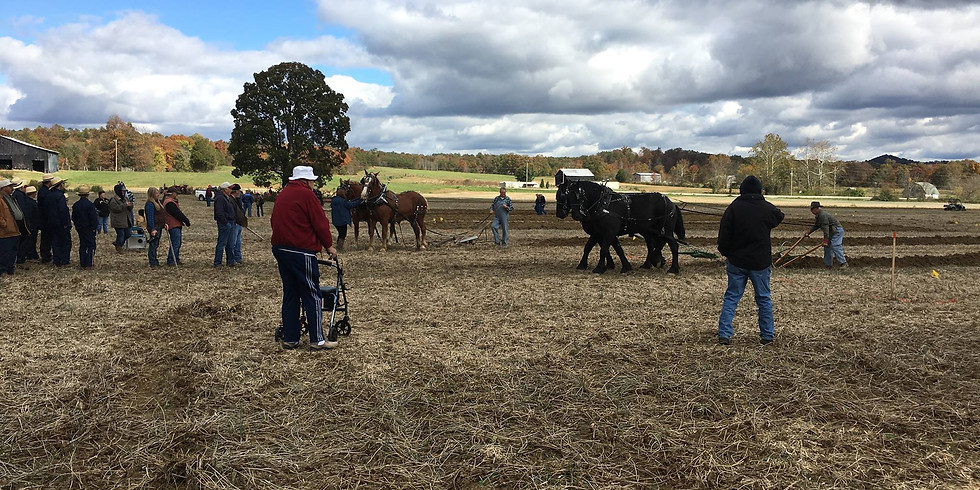 2021 US Draft Horse Plowing Competition