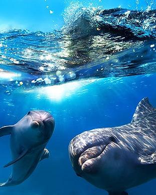 HawaiiDolphins2.jpg