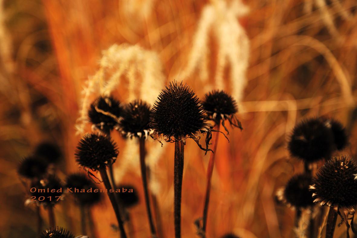 Schwarzes Gold des Herbstes