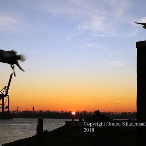 Die Möwen und die Sonnenuntergang