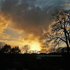 Der Wolkenbaum