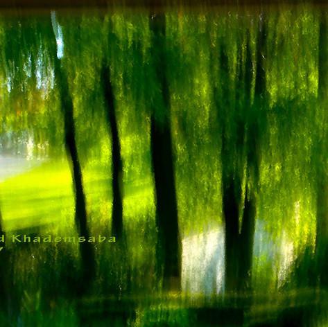Die goldenen Lichtblätter der Bäume