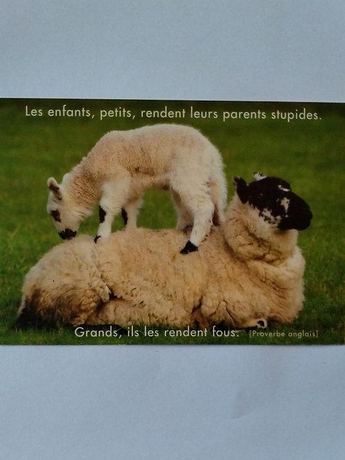 Carte moutons enfants