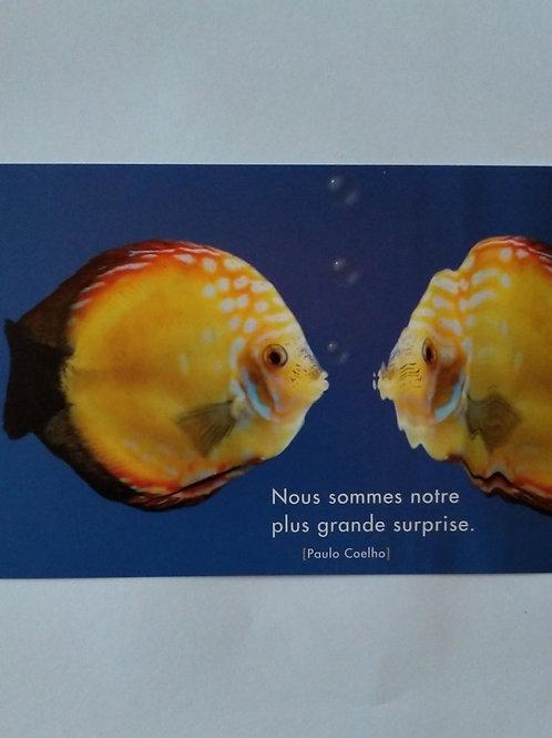 Carte poissons surprise