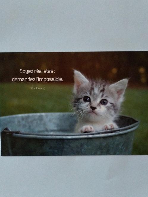 Carte chaton bassine