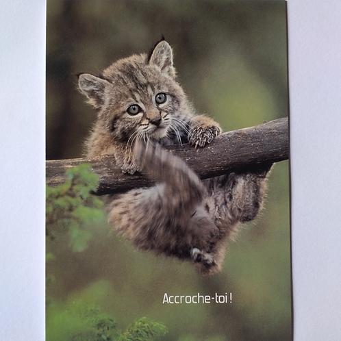 Carte lynx accroche toi