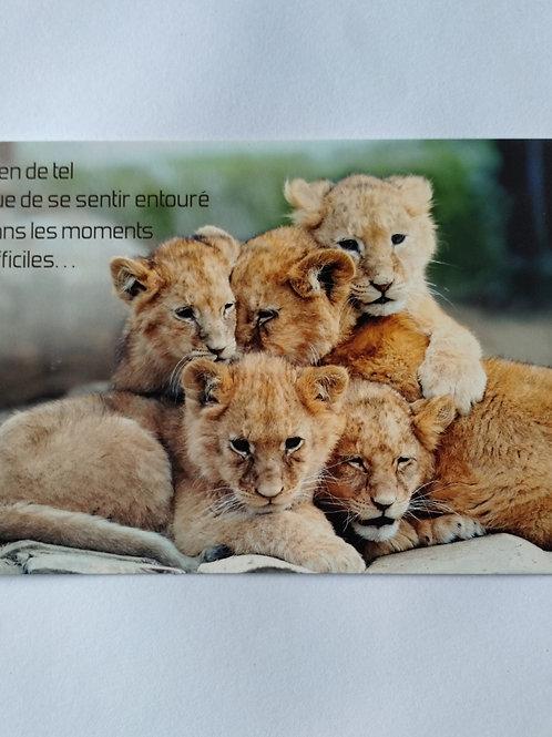 Carte lionceaux moments