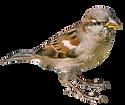 oiseaux1.png