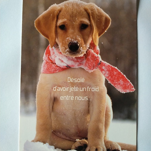 Carte chien froid