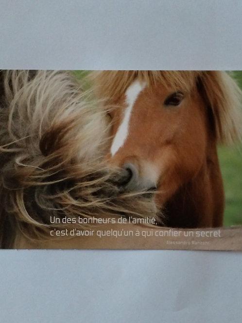 Carte cheval amitié