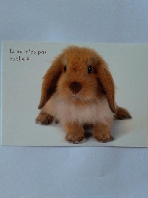 Carte lapin oublié