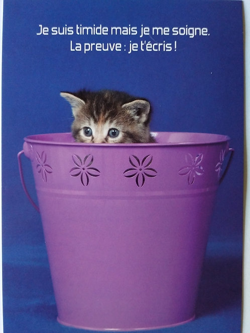 Carte chat timide