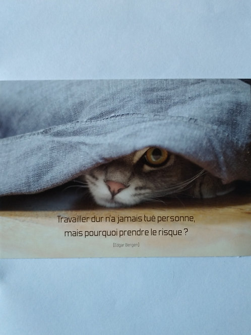 Carte chat travailler