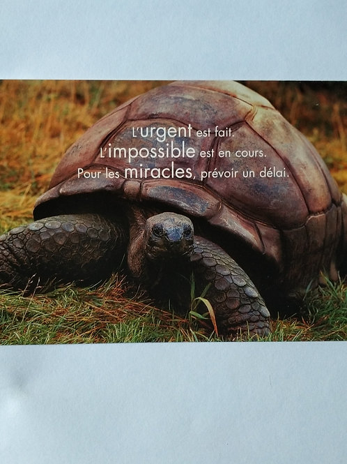 Carte tortue miracle
