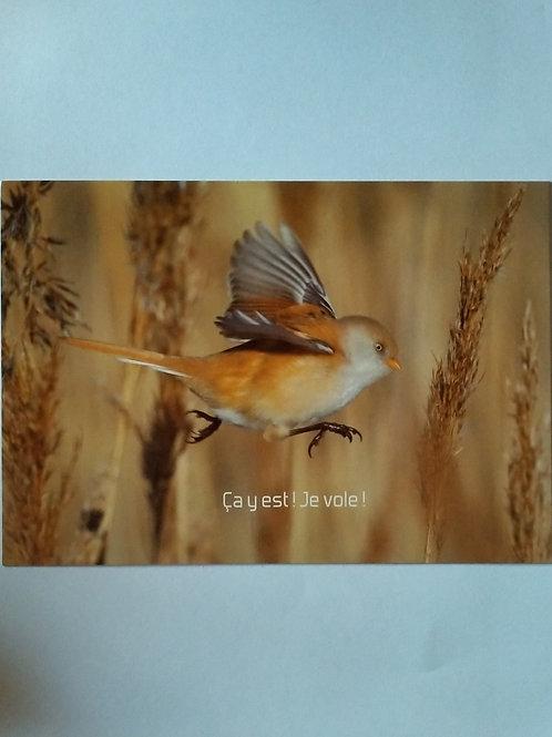 Carte oiseau, ça y est je vole !