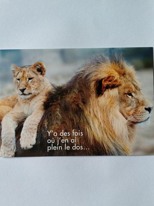 Carte lion plein le dos