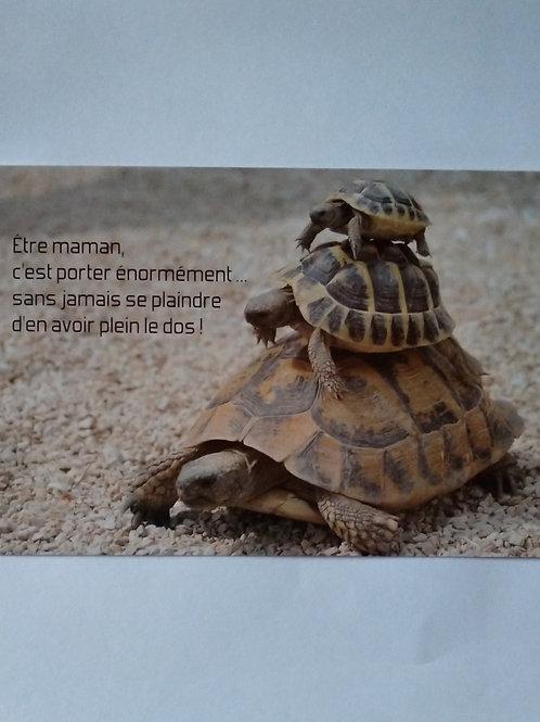 Carte tortues plein le dos