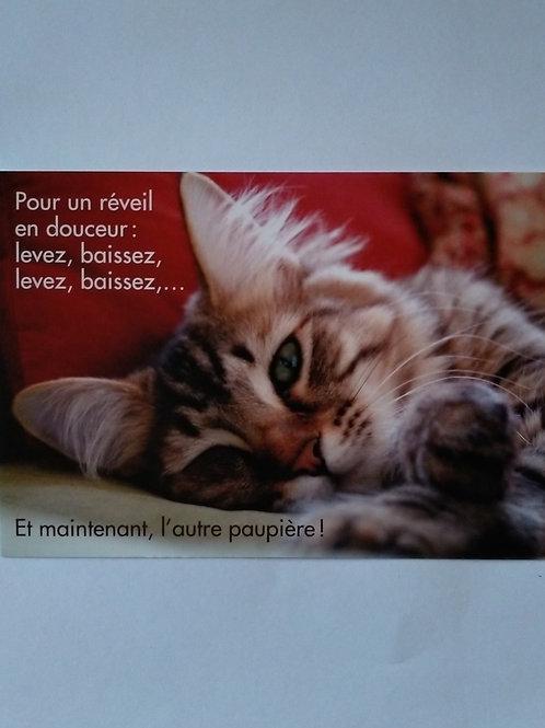Carte chat reveil