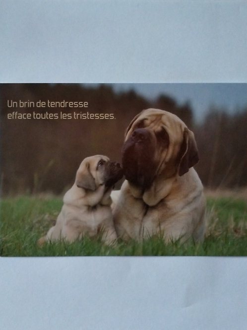 Carte chiens tendresse