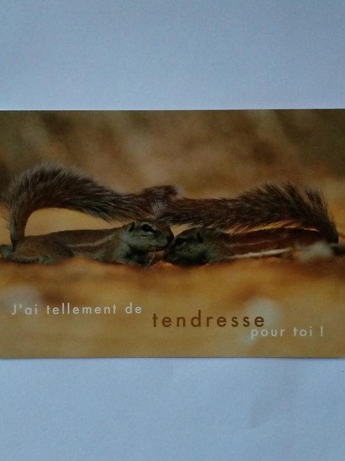 Carte écureuil tendresse