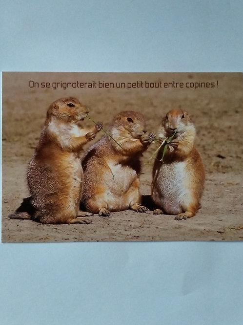 Carte marmottes grignoter