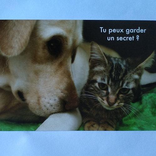 Carte chien chat secret