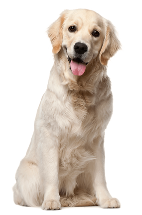 kisspng-dog-grooming-puppy-cat-pet-white