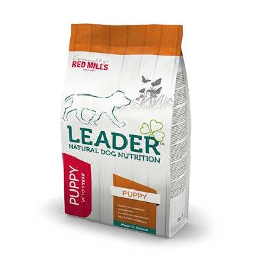 Redmills Leader Puppy