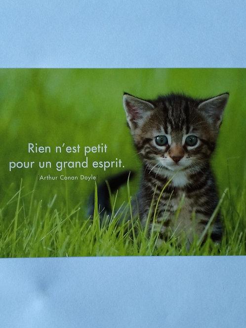 Carte chaton esprit