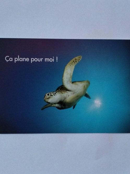 Carte tortue plane