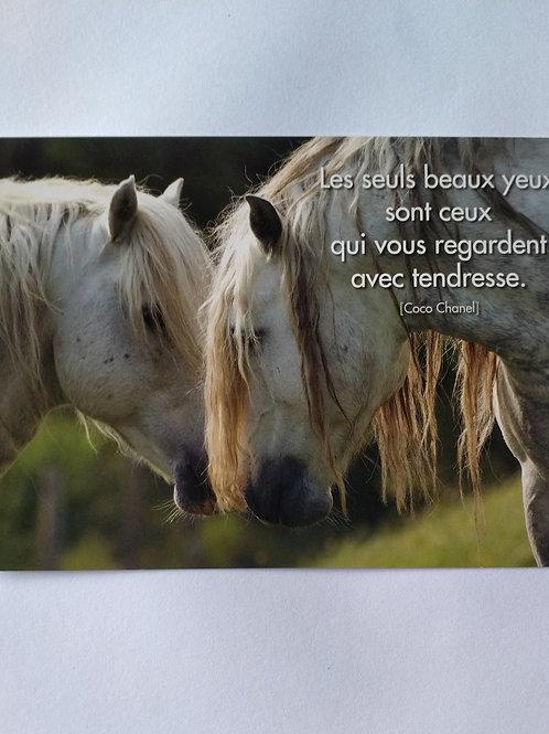 Carte chevaux tendresse