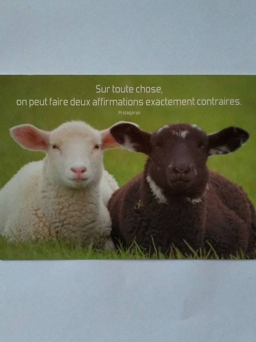 Carte moutons affirmation