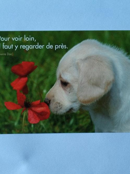 Carte chien fleur