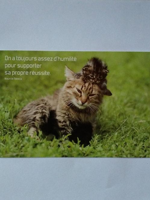 Carte chaton humilité