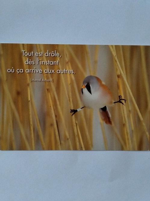 Carte oiseau pas drôle