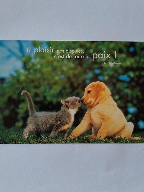Carte chien chat paix