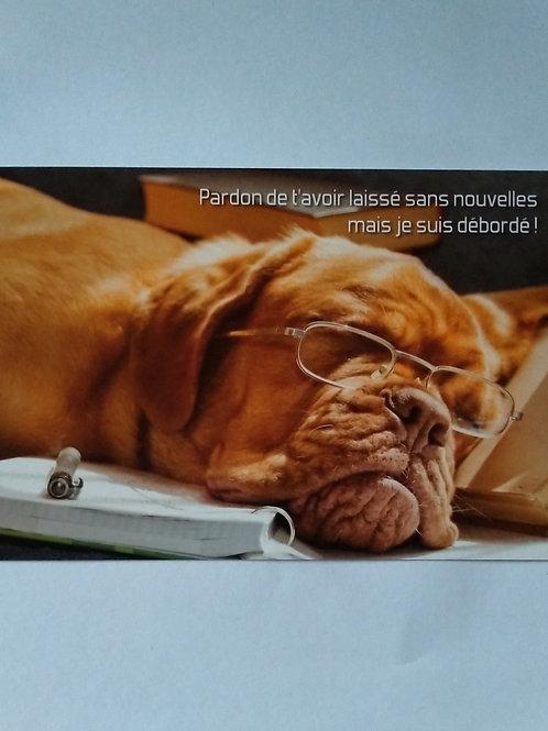 Carte chien débordé