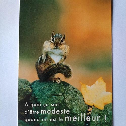Carte écureuil modeste