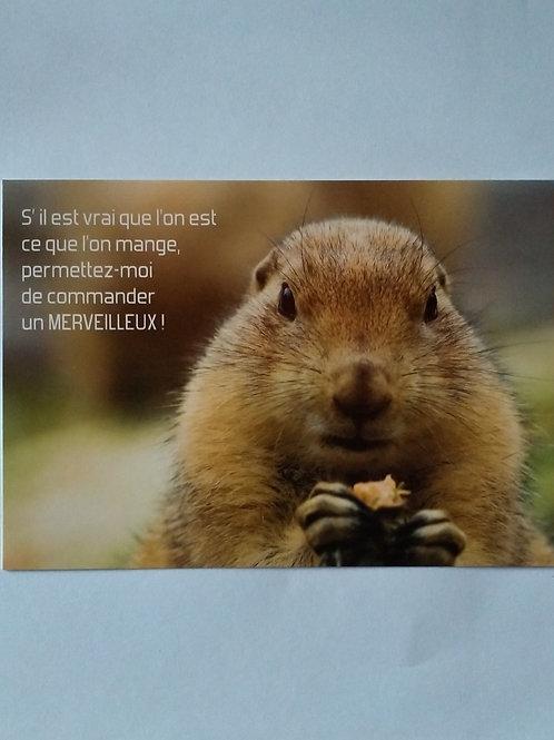 Carte marmotte merveilleux
