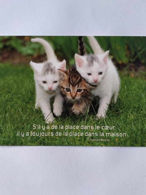 Carte chatons coeur