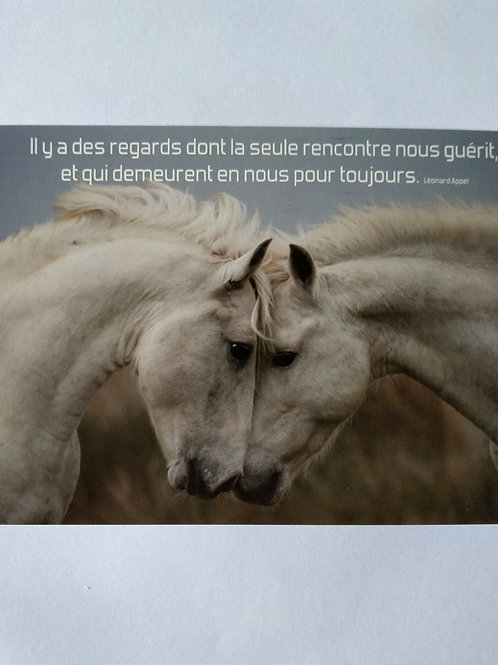 Carte chevaux regards