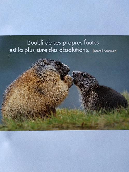 Carte marmotte oubli