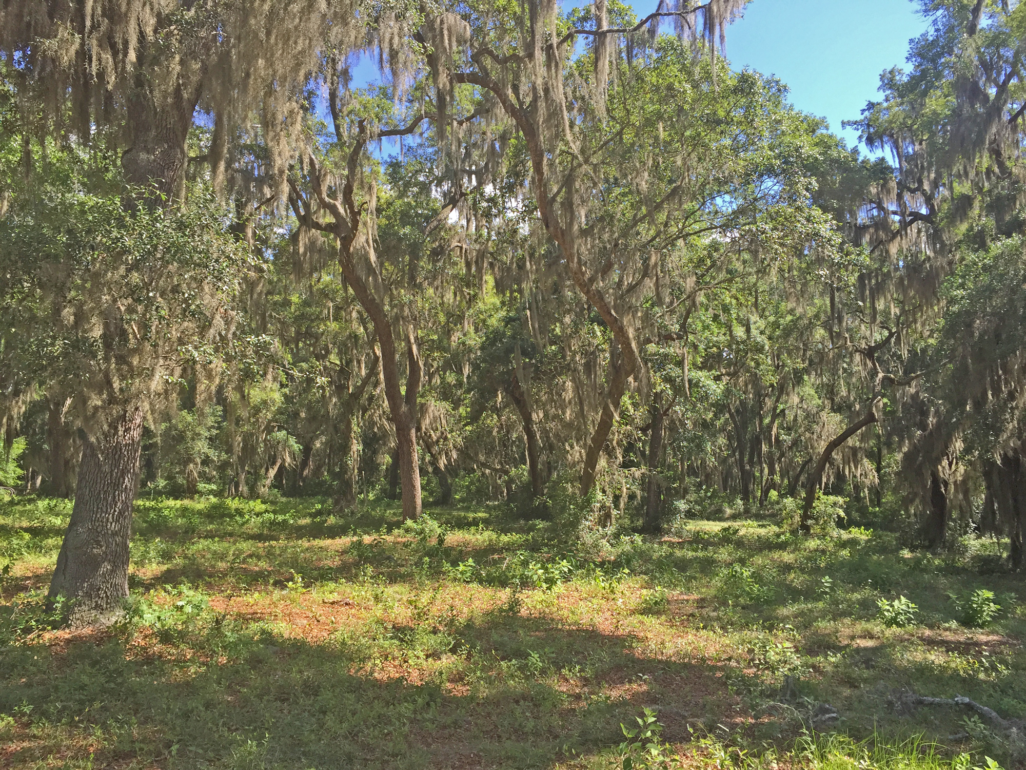Lot 860 - Offered at $30,000