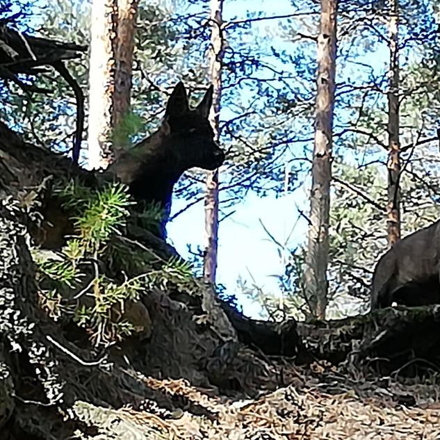 Wald6.jpg