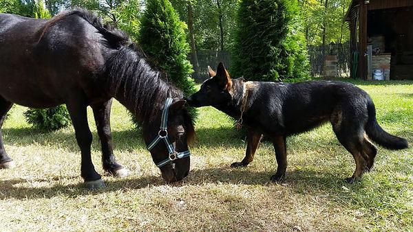 Oda Pony.jpg