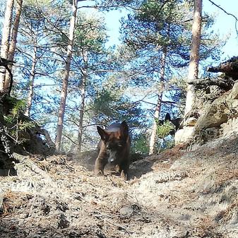 Wald3.jpg