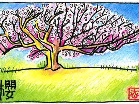 桜まつり中止のお知らせ