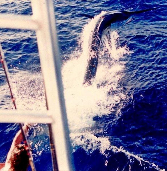 24A) ASSEGAI 1994 - 875 lb PACIFIC BLACK