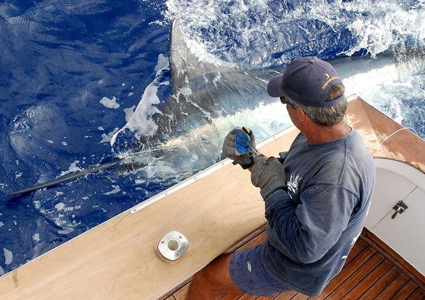 05) KONA - Big Blue Marlin 11-08-2015.JP